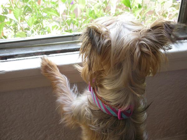 Čekajući na prozoru svoje vlasnike! - Page 2 Maggie