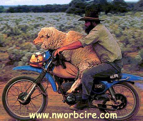 ¿Que moto es esta? Sheepdate