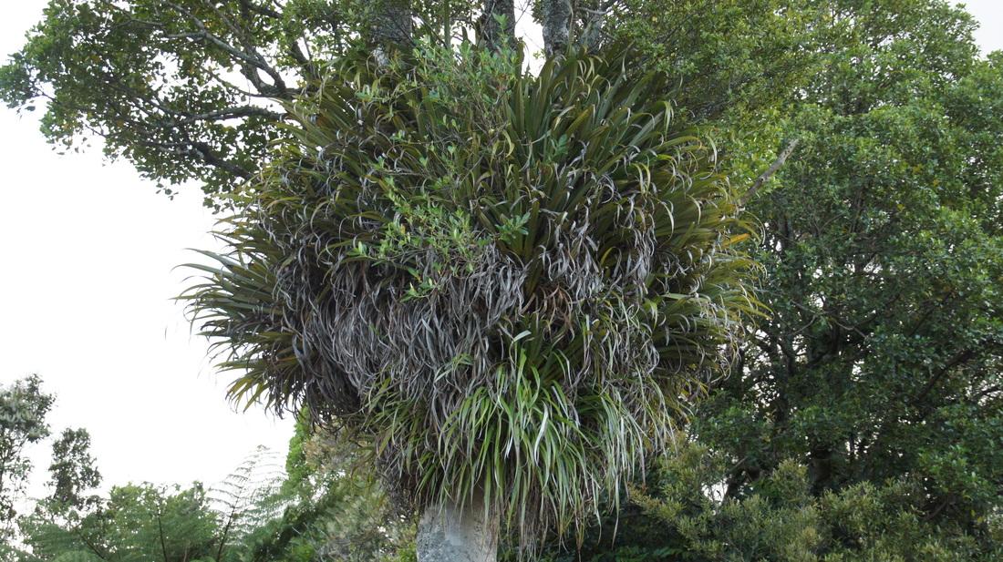 Plantes de fous ! forêts tempérées exotiques 7149678_orig