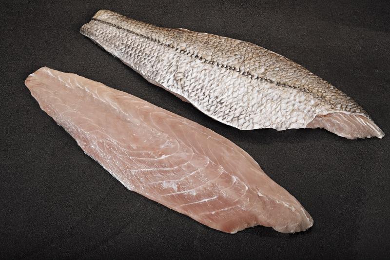 42 tipos de carnes de filete de pescados clase gourmet en imágenes TSL-2014-24-SNOOK-FILLET-FIXED