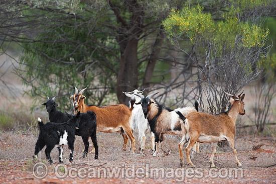Actualización de estado 09/03/17 Goat-24T5031-09D