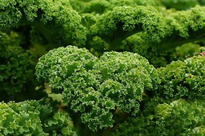 10 Fast-Growing Spring Vegetables You Can Harvest In About 30 Days Plant-1011492_640-400x266