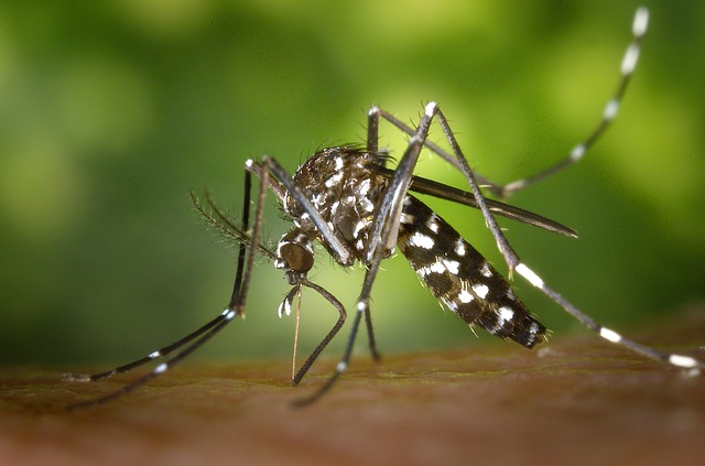 Time-Tested Essential Oils That Insects Simply Hate Tiger-mosquito-49141_640