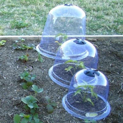 Tricks And Secrets To Keep Rabbits From Destroying Your Garden Cloches-1-400x400