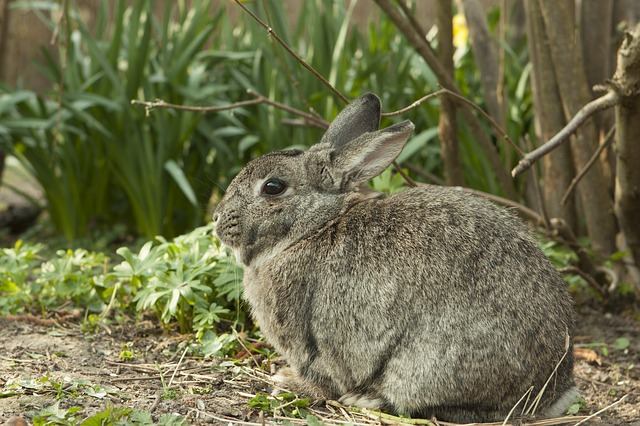 Tricks And Secrets To Keep Rabbits From Destroying Your Garden Rabbit-717855_640