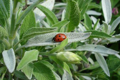 7 Heal-Anything Medicinal Plants You Can Grow Indoors Ladybug-1428899_640-400x266
