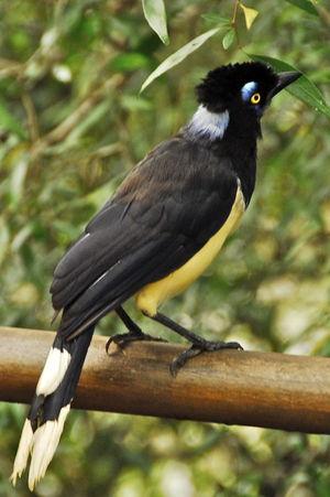 quel est cet animal? ptit loulou - 8 novembre trouvé par Paul  Geai.acahe.arpr.2p