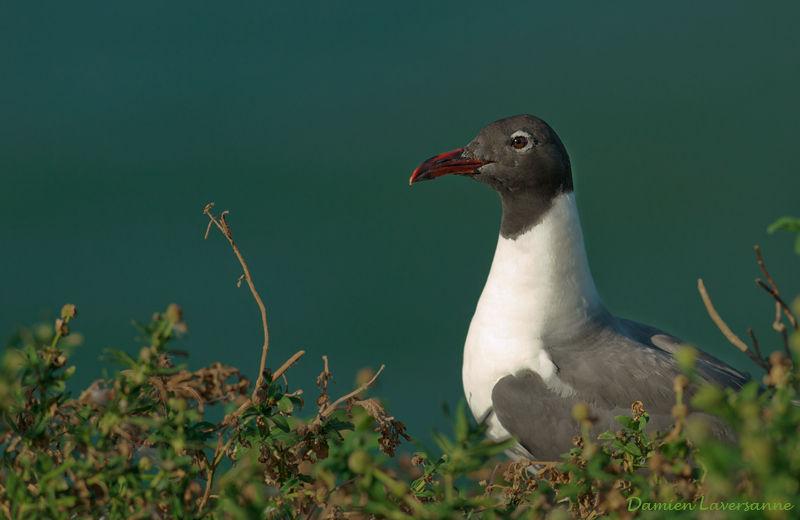 Un oiseau - 30 octobre - ajonctrouvé par Martine Mouette.atricille.lada.10g