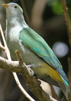 oiseau Martin 6 avril trouvé par Martine Ptilope.de.la.societe.xami.4p