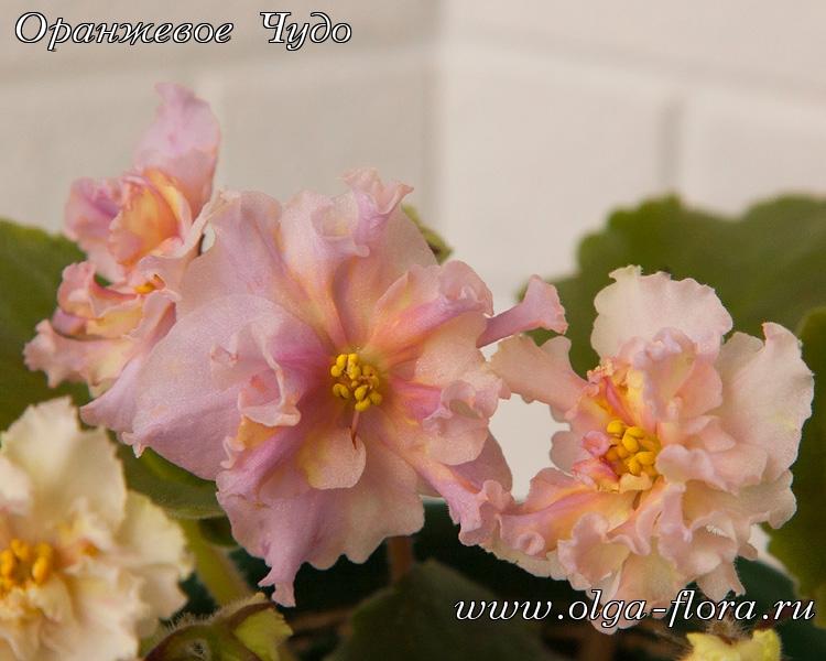 Sunkissed Rose     (LLG/D. Herringshaw) - Страница 7 2ll9bxfrzwmpsuezryall8mluqukhbdi