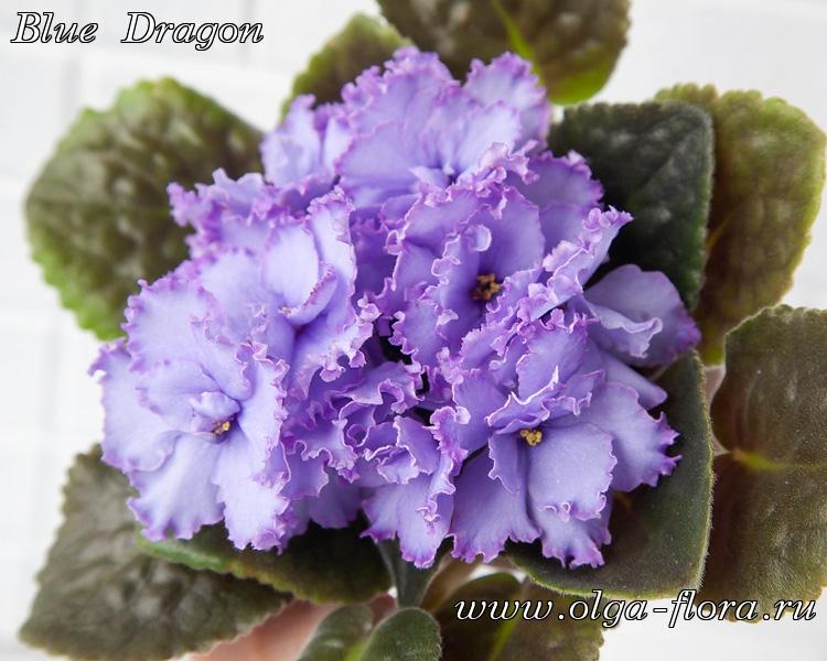 Blue Dragon   (S. Sorano) - Страница 7 4r8l3vfnz3ohskmerz36ab5da2hlgwbk