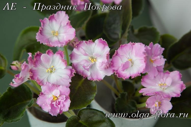 ЛЕ - Праздник Покрова (Лебецкая) 6doz01mehfmo2on0edb8gckqu4h3tskz