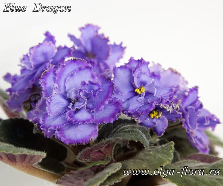 Blue Dragon   (S. Sorano) - Страница 6 6kozro75b6xy2by48cig7b2govnlkk6p