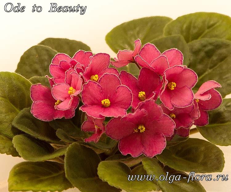 Ode to Beauty   (G. Cox/B. Johnson) 74c6s0f7nbhf7qay4hqakosr9nfa0yag