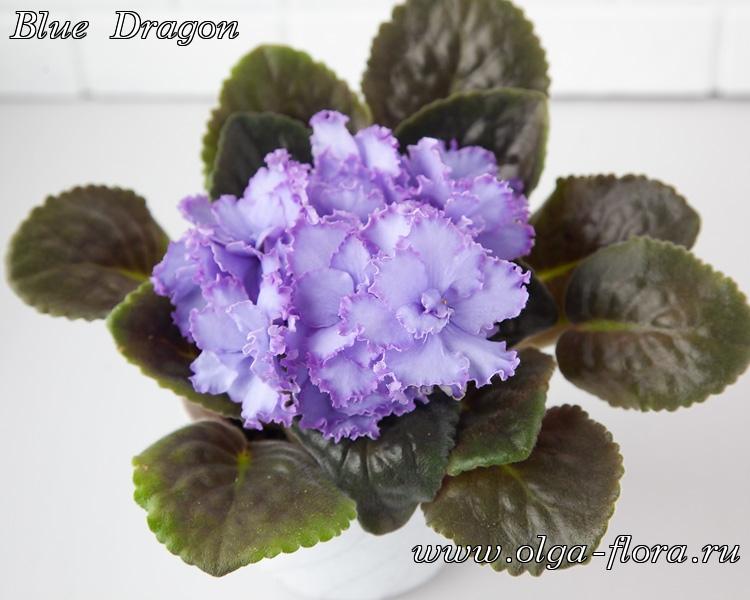 Blue Dragon   (S. Sorano) - Страница 7 7zjlp1oy1jace6vbgasej7vrier7dbkj