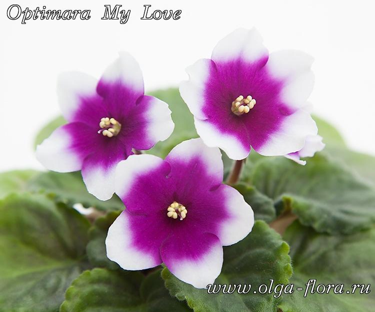 Optimara My Love (Holtkamp) 9qe5rs82n6iluppfs7pp9ceu0259jo4s
