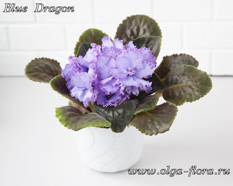 Blue Dragon   (S. Sorano) - Страница 7 A4614tz5d0hrfd4wnva837zkkqry2bib