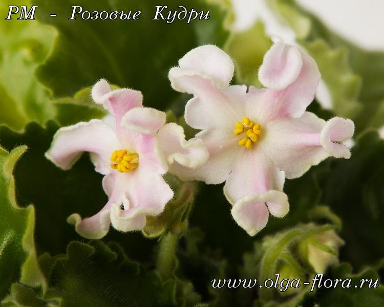 РМ-Розовые кудри (Н. Скорнякова) B38zcdrs7hsawy83n8c4huko7w936r1h