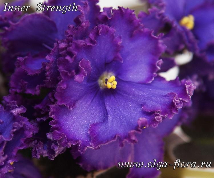 Inner Strength (P.Sorano/LLG) B3eb2stgh8zjgjzopycmwm912s0tmn0y
