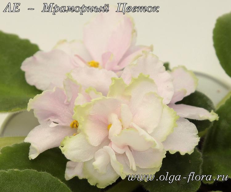 ЛЕ – Мраморный Цветок (Лебецкая) Bkx59mogq2cv321uhylu6pz193gqcgqn