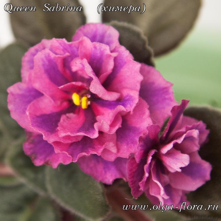 Queen Sabrina  - Страница 2 Crvyj98y2z3oomzy6kbn8l7l3pmjpzj2
