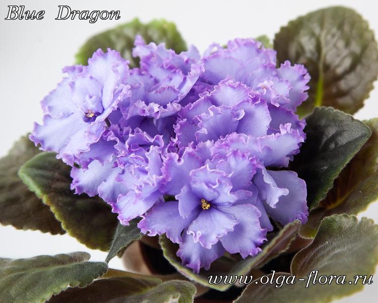Blue Dragon   (S. Sorano) - Страница 7 Enbihanuk5m1hqw6m8codb9y3zx4affp