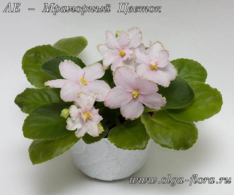 ЛЕ – Мраморный Цветок (Лебецкая) Gzum554n6dqf9b1mnga56gbfdxk2ynif