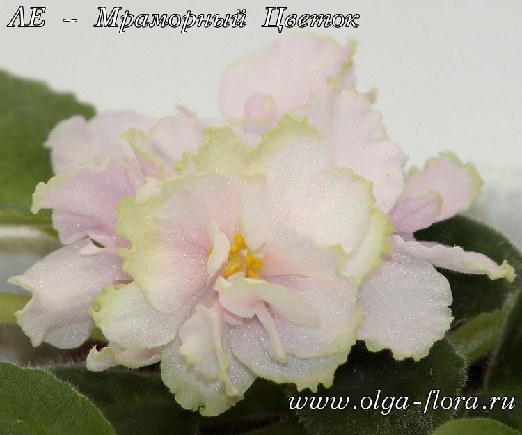 ЛЕ – Мраморный Цветок (Лебецкая) I2kxtnok95cv62o5rgyqc856vi4fh011