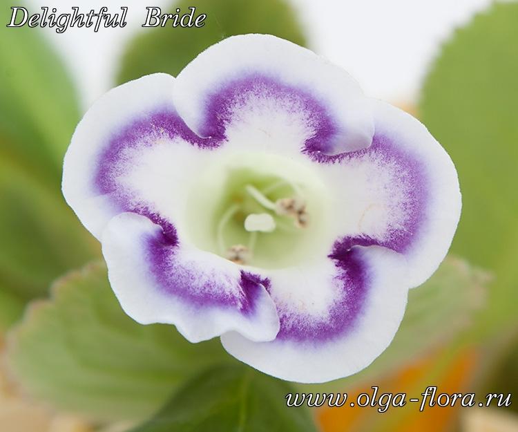 Delightful Bride L2bw23c1ylllq1do14tivy743c64mf68