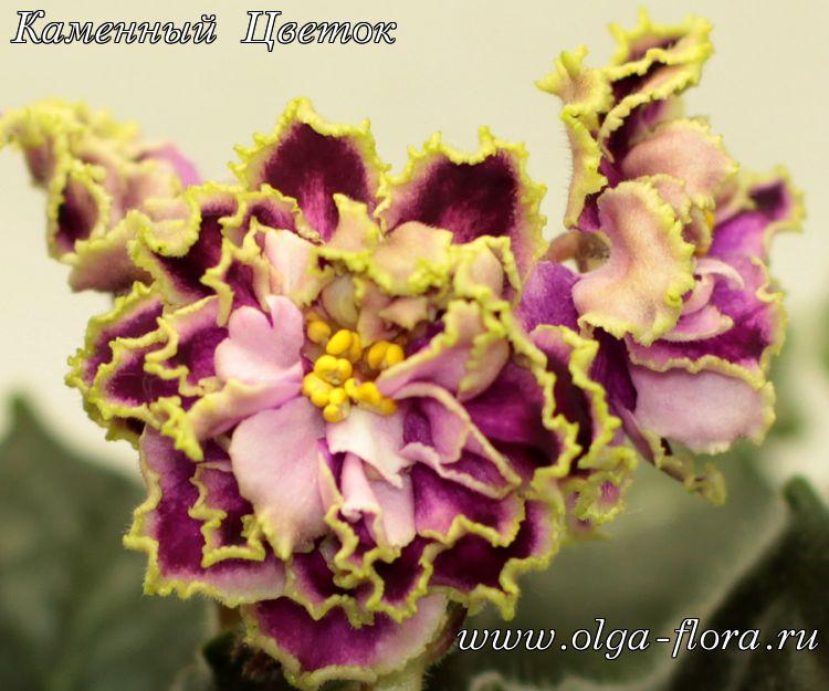 Каменный Цветок (Морев) Mycnw8ghie1x4g5o1ltun9ai6iibospa