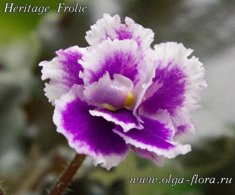 Heritage Frolic (A.E.Adams)  - Страница 2 Q6fqylp6f6va9nwc18pqbdy9fvuzctc4