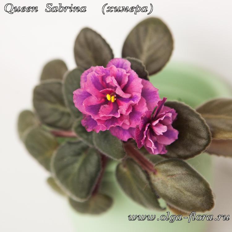 Queen Sabrina  - Страница 2 Re1am90o8bdwydu4x6r5rxqtncdccwe4