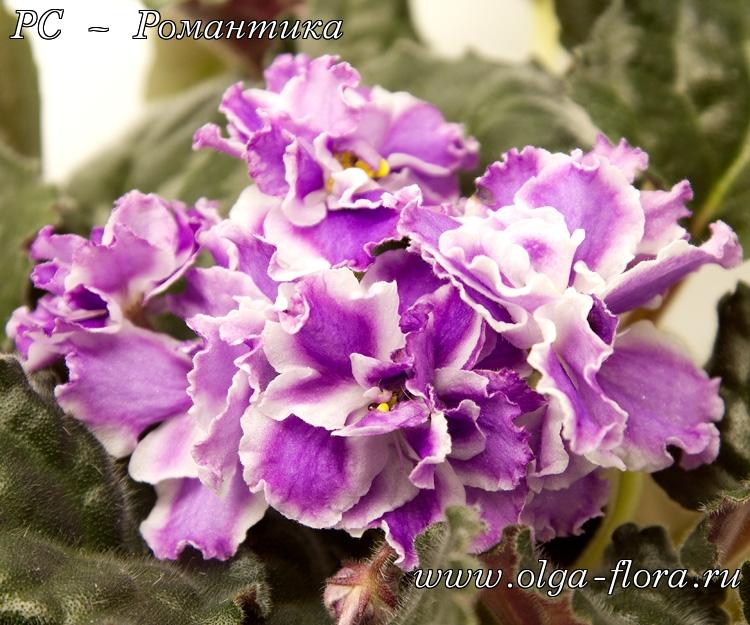 РС – Романтика (Репкина) Sgzxuofls443lmgfgpaw0ej1r79jgpq0