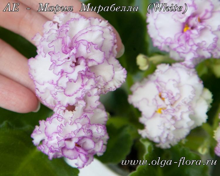 ЛЕ - Мария Мирабелла (White) (Лебецкая) Sz3y9z5sf0gn8mqywuku7atkscys81cz