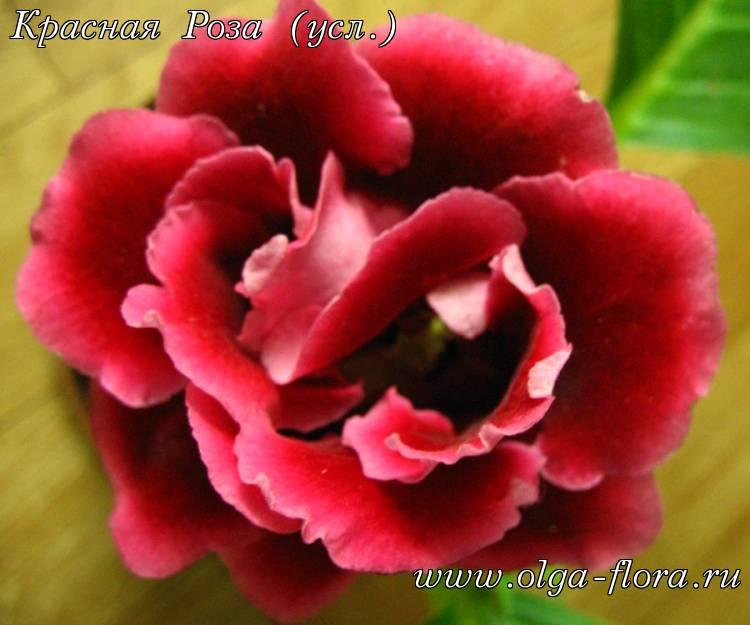 Красная Роза (усл.)  Tzznpgafnlq4p538vskj0s47uii8qyjk