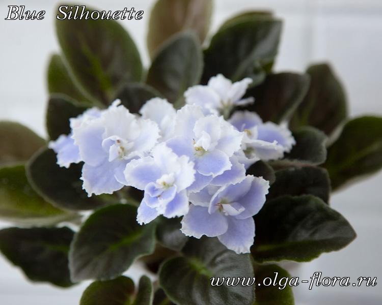 Blue Silhouette (S.Sorano) Uap7ykscim95366ic5d9c2z9mq6xpwrj