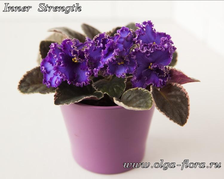 Inner Strength (P.Sorano/LLG) V71gpwi6xd7a1e06vk9wscnzjfun3s5y