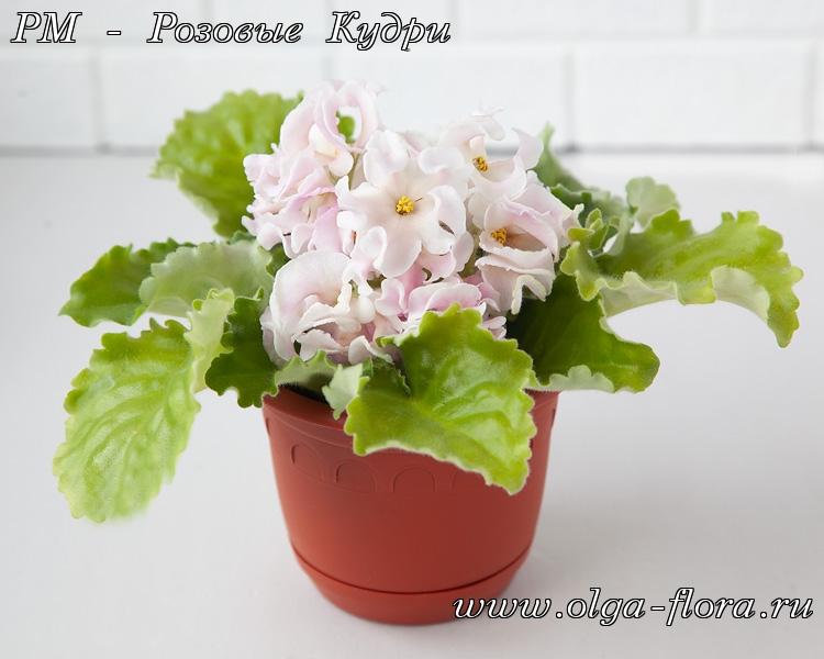 РМ-Розовые кудри (Н. Скорнякова) Vgfuxp69avgmjsee9r10uh38tb31zbjv