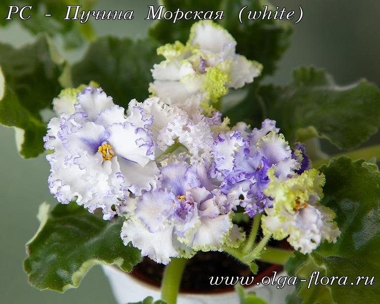 РС - Пучина Морская (white) (Репкина) Yhf16jagrizu0iy6ntwhzpwjjo5w4o83