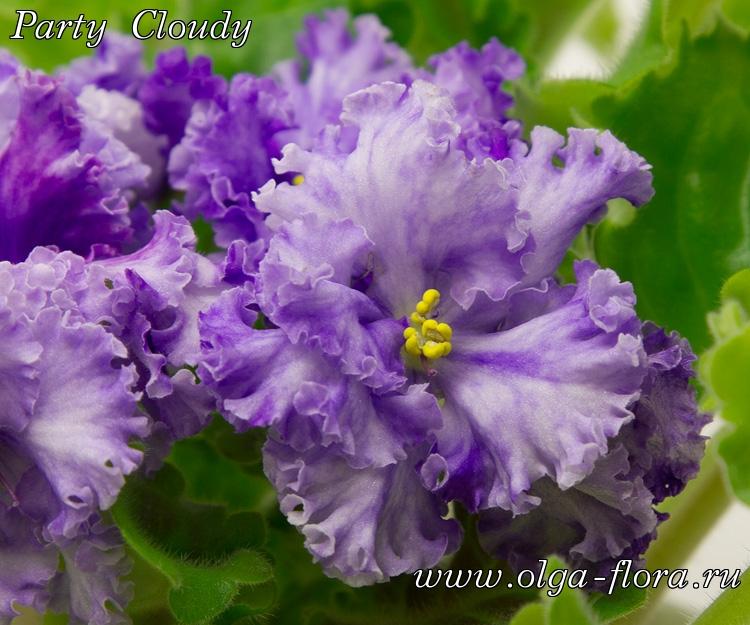 Party Cloudy Yqvzd9b28v09pipyyzubs1r749p0d4qc