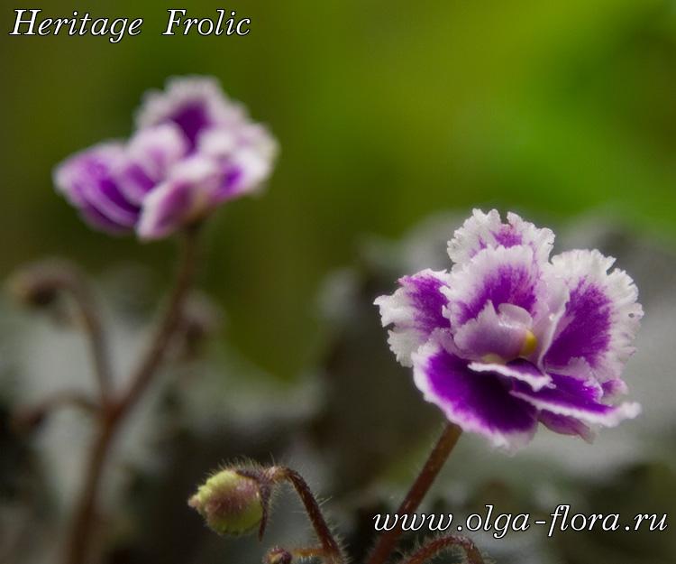 Heritage Frolic (A.E.Adams)  - Страница 2 Zruxcj4spz4ymzan8zejdcrs8lrkf5of