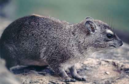 حيوانات مهددة بالإنقراض 4585.imgcache