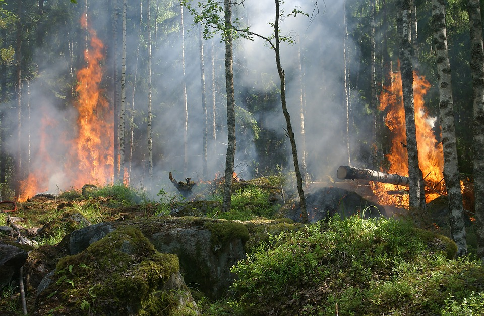 Feux de Forêts : l'OMPE demande en urgence la tenue d'états généraux ! Forest-fire-432870_960_720