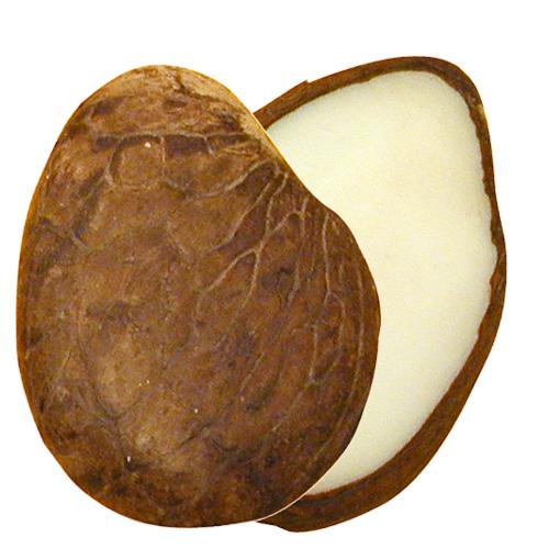 Ivoire végétal pour sculptures  8566-Tagua-Nut-Slices-Naya-Nayon-Ecuador-Fair-Trade
