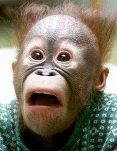 Coins de photos amusantes AUTRES que chiens et chats, n'hésitez pas à en rajouter Monkeyfear-peursinge
