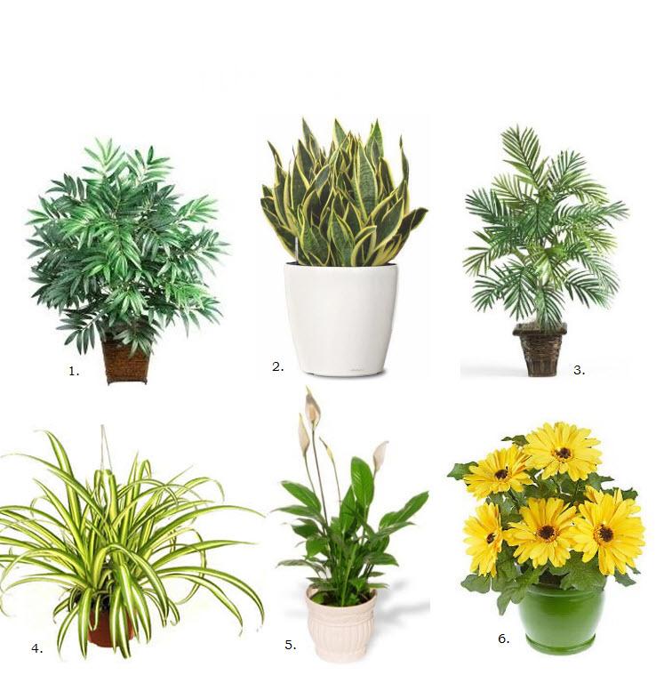 افضل 6 نباتات منزلية لتنقية الهواء Air-purifying