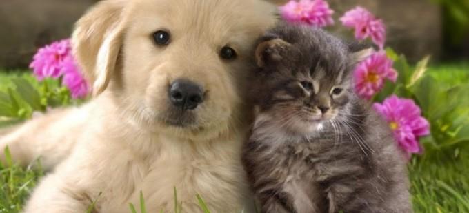 Volim te kao prijatelja, psst slika govori više od hiljadu reči - Page 11 Prijatelji-680x309