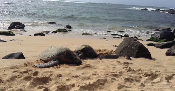 Ditching Physical Expectation in the Great 5D Shift - Finding Paradise Within Honu%20-%201%20%281%29