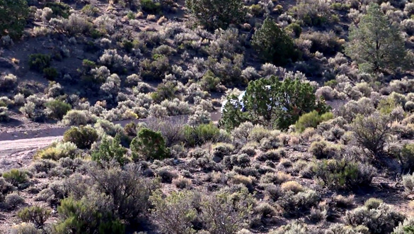 "Man sneaks up on Area 51 ""Cammo Dudes,"" they get mad (Video) Area-51-Cammo-Dudes-Hiding"