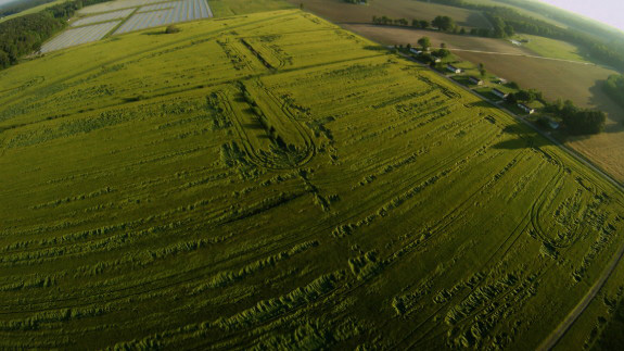 Aliens accused of making strange symbols in barley crop in Mexico  Flattened-Barley-near-Dover-Air-Force-Base